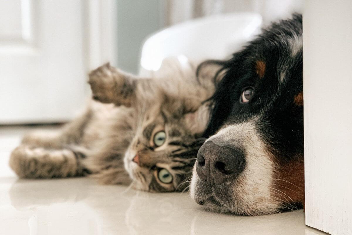 cbd para cães e gatos: O que é o sistema endocannabinoide
