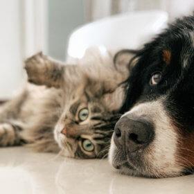 cbd para cães e gatos